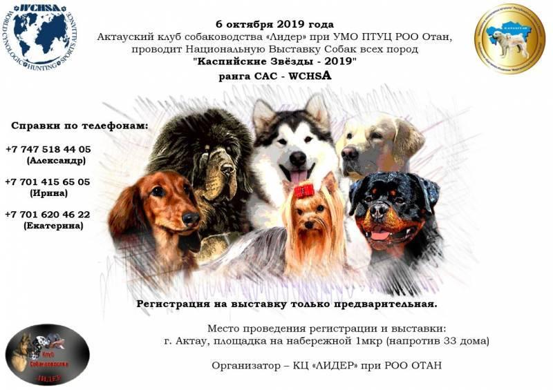 Национальная выставка собак всех пород CACIB WCHSA