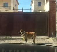 Пропавшая собака