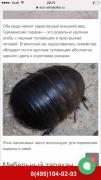 Египетский таракан в Актау