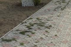 Очередные чудеса в парке Акбота