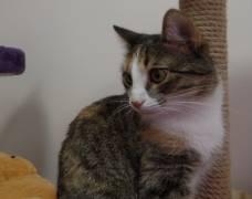 Помогите найти кошку