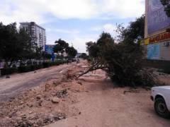 Уничтожают деревья