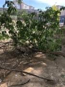 Уничтожение дерева