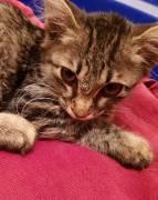 Ищем семью для котёнка