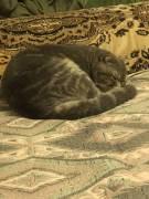 Потерялся кот по кличке Нами