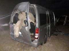 Животные на дорогах области