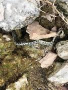 Не убивайте змей!