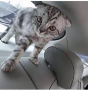 Пропал котёнок