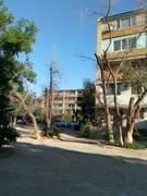 Кладбище деревьев в 4-ом микрорайоне Актау
