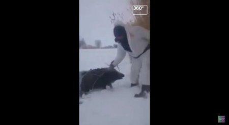 Видео спасения кабанов охотниками было снято в Казахстане