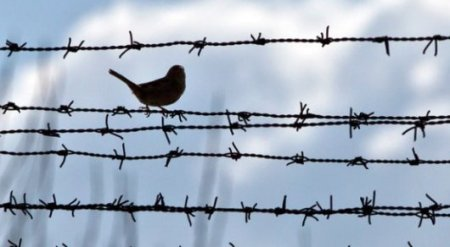 25 человек уже вышли на свободу по амнистии в РК