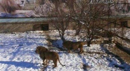 Силовики избили казахстанца в Крыму - СМИ