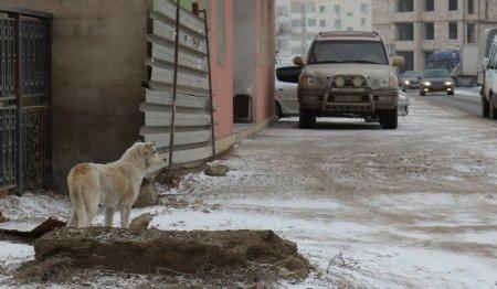 Жители Мангистау пожаловались на бродячих собак в жилых массивах