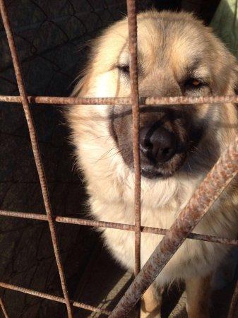 Волонтеры: Проблему бродячих собак в Актау может решить стерилизация животных