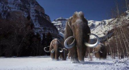 Через два года на Земле снова появятся мамонты - ученые