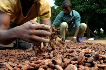 Кот-д'Ивуар пересмотрит бюджет из-за падения цен на какао