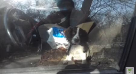 Случай с запертой в машине собакой в Алматы прокомментировали в МВД РК