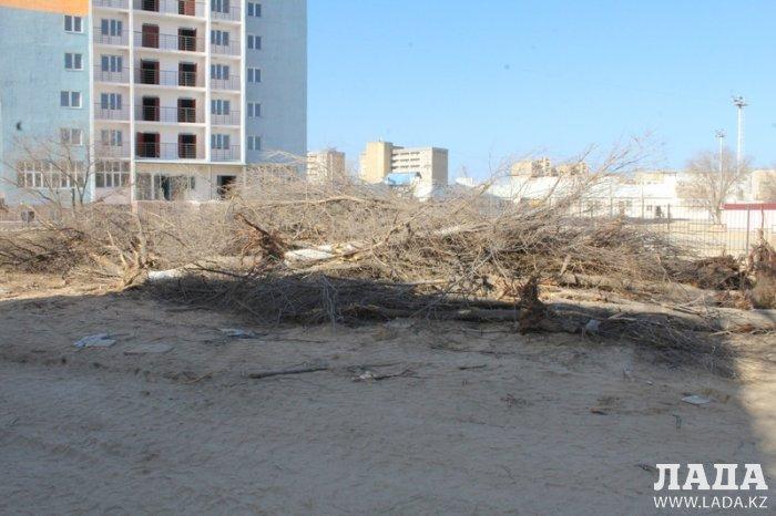 Ольга Ергизова: Вырубка сухих деревьев проходит по закону