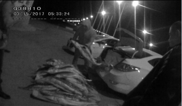 Жителя Актау задержали с рыбой осетровых пород весом свыше 230 килограммов