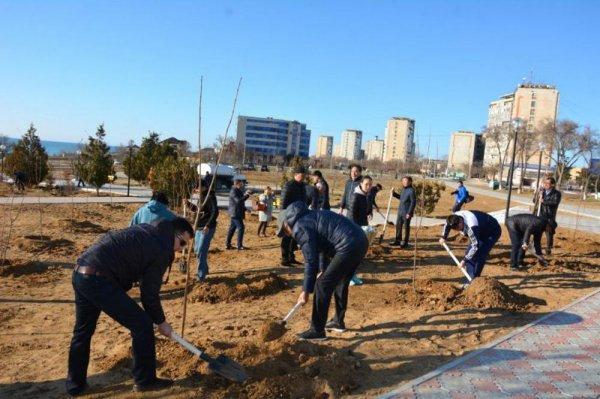 В Актау обещали высадить 15 тысяч деревьев