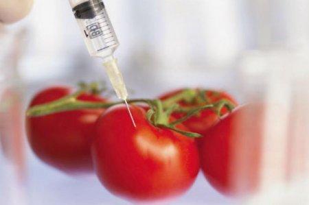 ГМО-продукты становятся опасными для жизни казахстанцев - Бекетаев