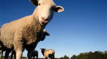 Штраф за выпас скота без присмотра хотят ввести в Казахстане