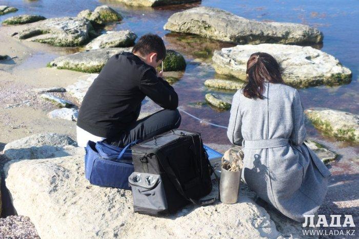 Обнаруженная тушка мертвого тюленя стала поводом для проверки экологами побережья 15 микрорайона