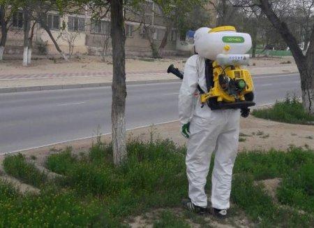 Абай Кожабаев: В Актау начали обработку зеленых насаждений от насекомых