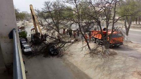 Упало дерево ВИДЕО