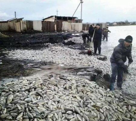 Пять тонн мертвой рыбы выбросило на берег озера в Северном Казахстане