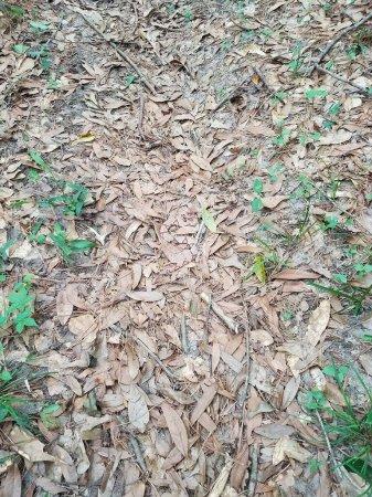 Загадка о змее заставила пользователей сети часами глазеть на снимок с листвой