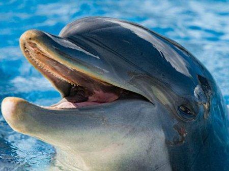 Шведские ученые решили составить словарь языка дельфинов