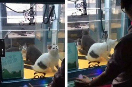 Игровые автоматы с живыми котятами появились в Китае