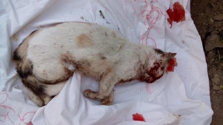 Жители 14 микрорайона Актау требуют наказать виновных в смерти четырех кошек