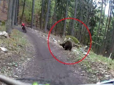 Медведь устроил охоту за велосипедистом в Словакии