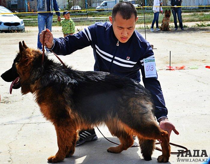 Выставка собак прошла в Актау