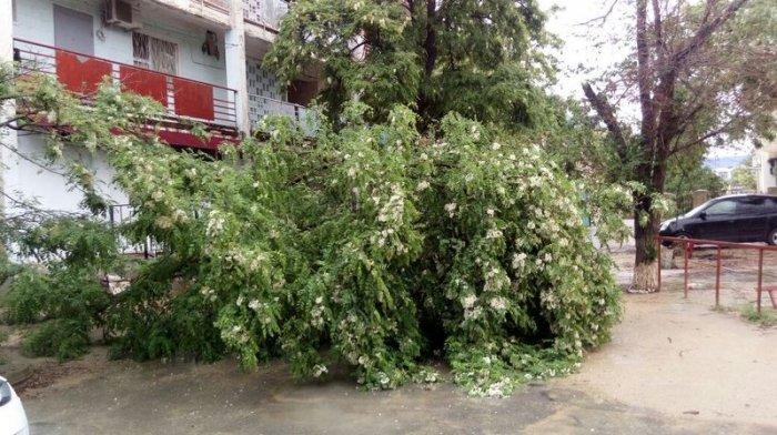 Во время ливня в Актау упало шесть деревьев