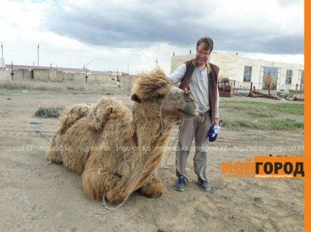 По Шёлковому пути к Каспию отправился житель Швеции вдвоём с верблюдом