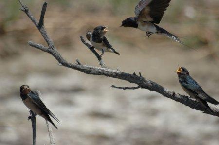 Над территорией Мангистау пролетают 320 видов птиц
