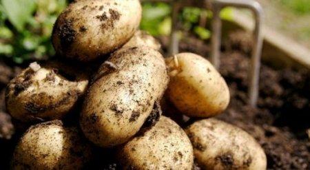Картошка в полтора раза подорожала в Казахстане