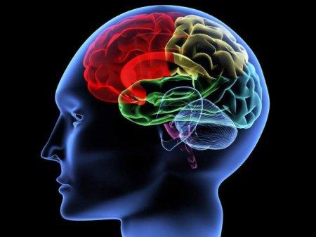 Назван самый полезный продукт для мозга
