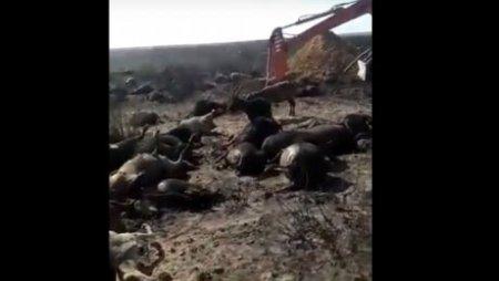 Озвучена предварительная причина пожара, сгубившего пастуха и полторы тысячи овец
