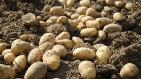 В Темиртау из-за прошлогоднего картофеля погиб человек