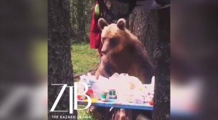 Снятый на видео в горах близ Риддера медведь-воришка покоряет Казнет