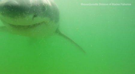 Ученым удалось снять на камеру момент атаки белой акулы