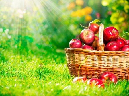 Яблоки будут раздавать на переменах в школах Грузии
