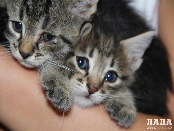 «Ладные» котята ждут своих хозяев