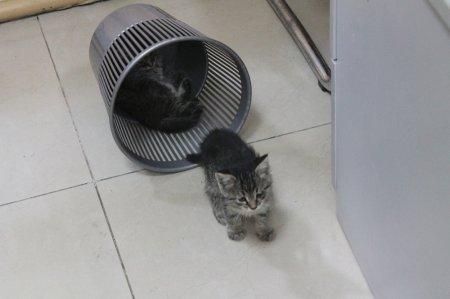 Двое замечательных котят ждут своих хозяев