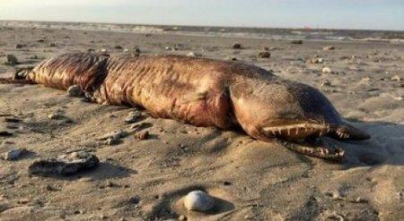 """Загадочное зубастое существо нашли на техасском пляже после урагана """"Харви"""""""