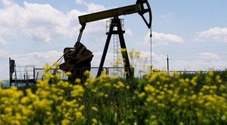 Цена на нефть впервые за пять месяцев поднялась выше 55 долларов